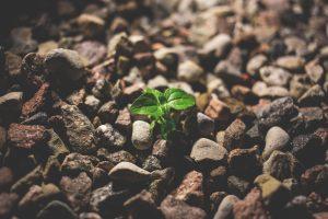 seedling-in-rubble